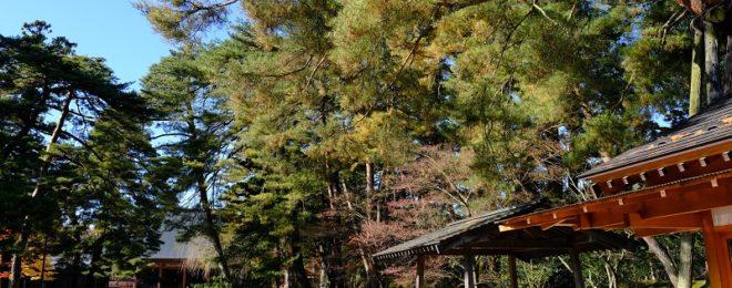 毛越寺の写真