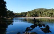 毛越寺大泉ヶ池の風景写真